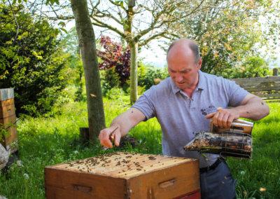 Bienenkooporation